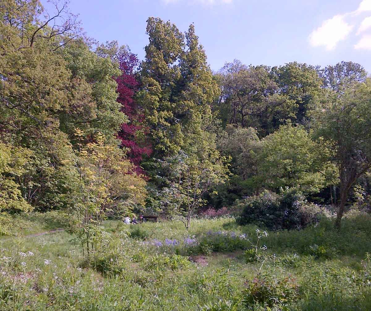 Sydenham Wood London