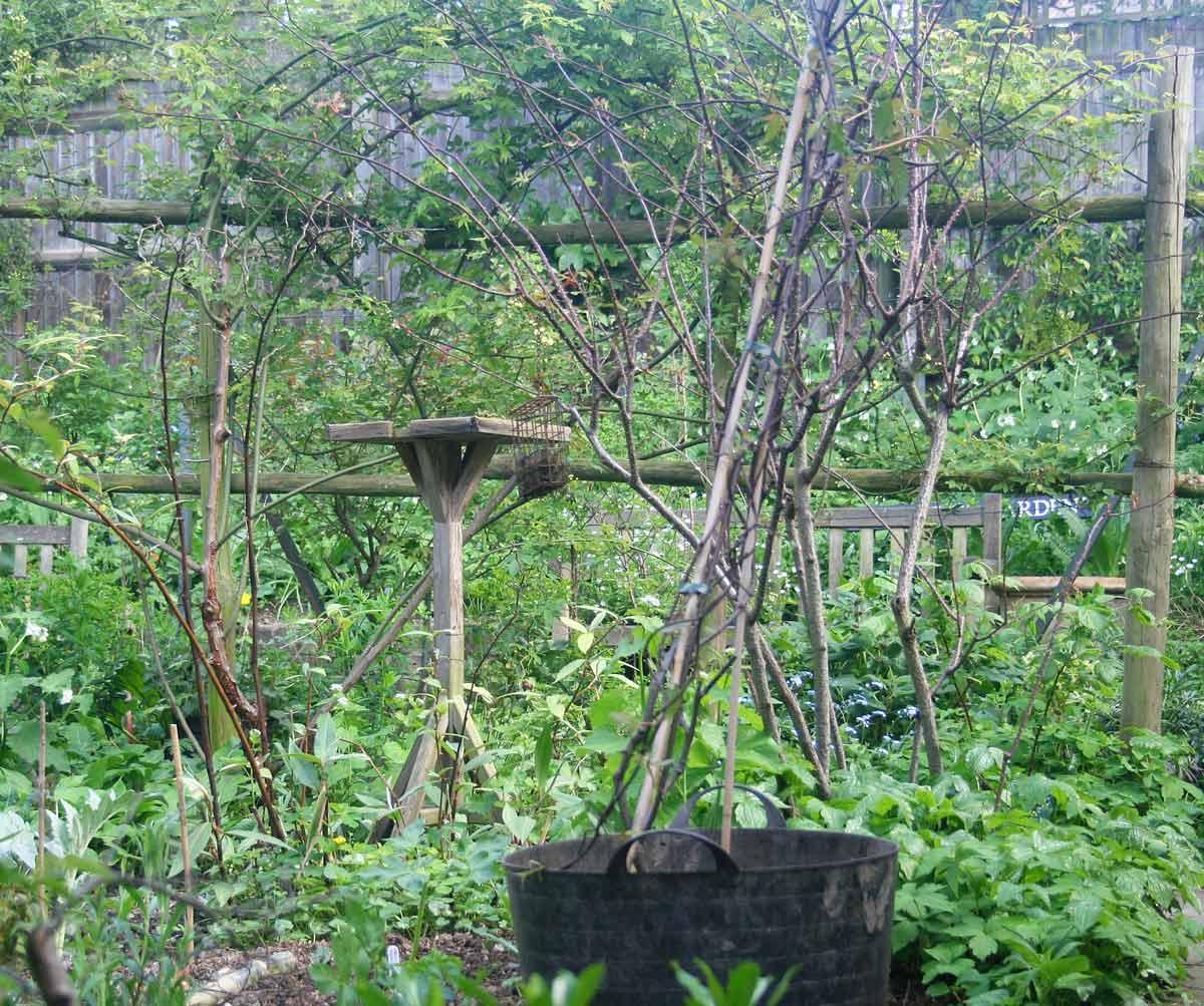 South London Botanical Institute Norwood Road
