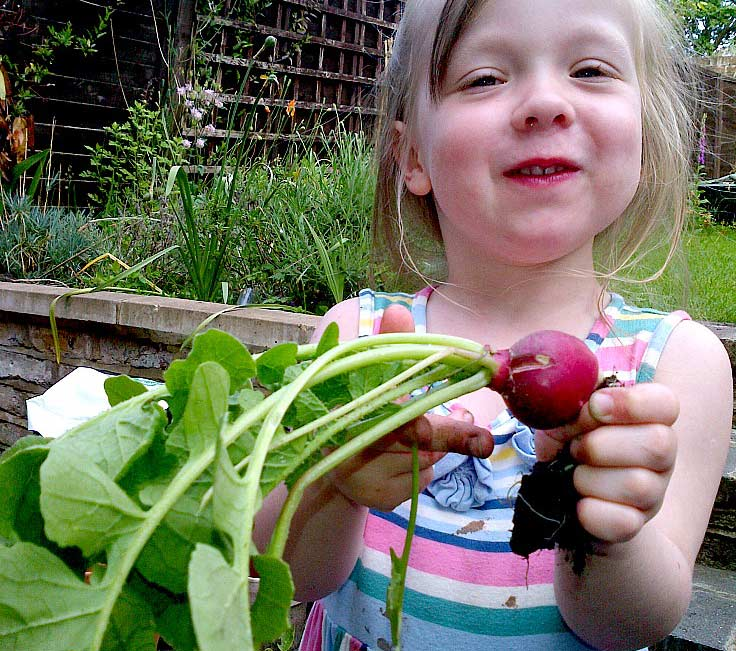 Growing radishes with kids