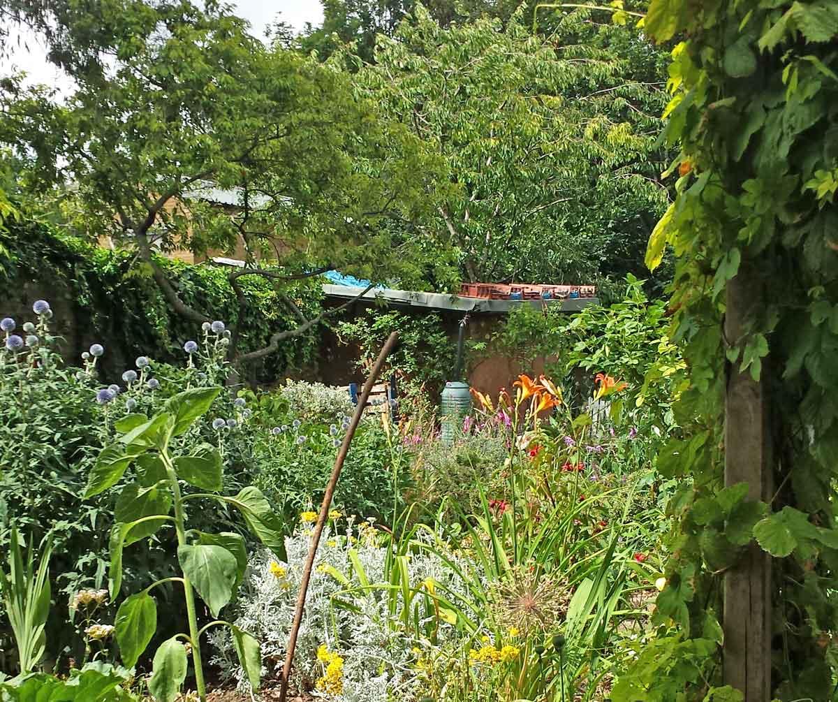 Hackney City Farm London