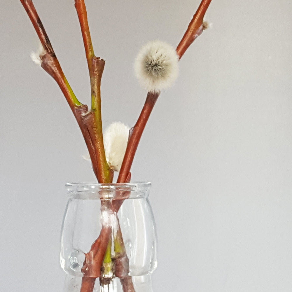 Pussy willow - simply pop some pussy willow in a jar of water and watch it grow with the kids. It will root and grow new shoots and the pollen will appear on the catkins