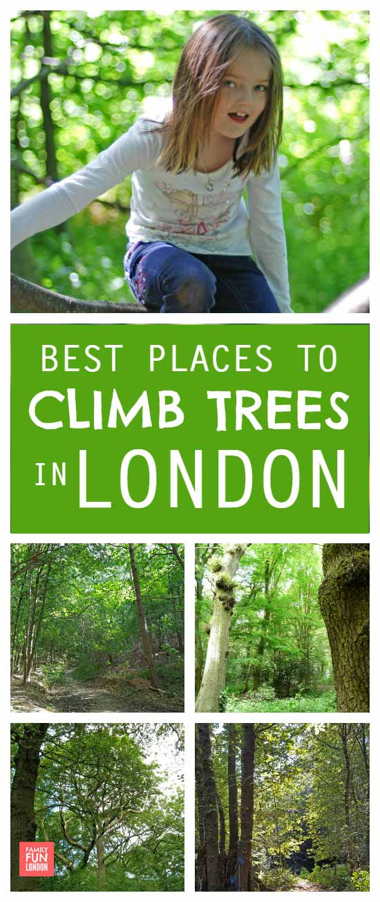 London woods - best places to climb trees in London