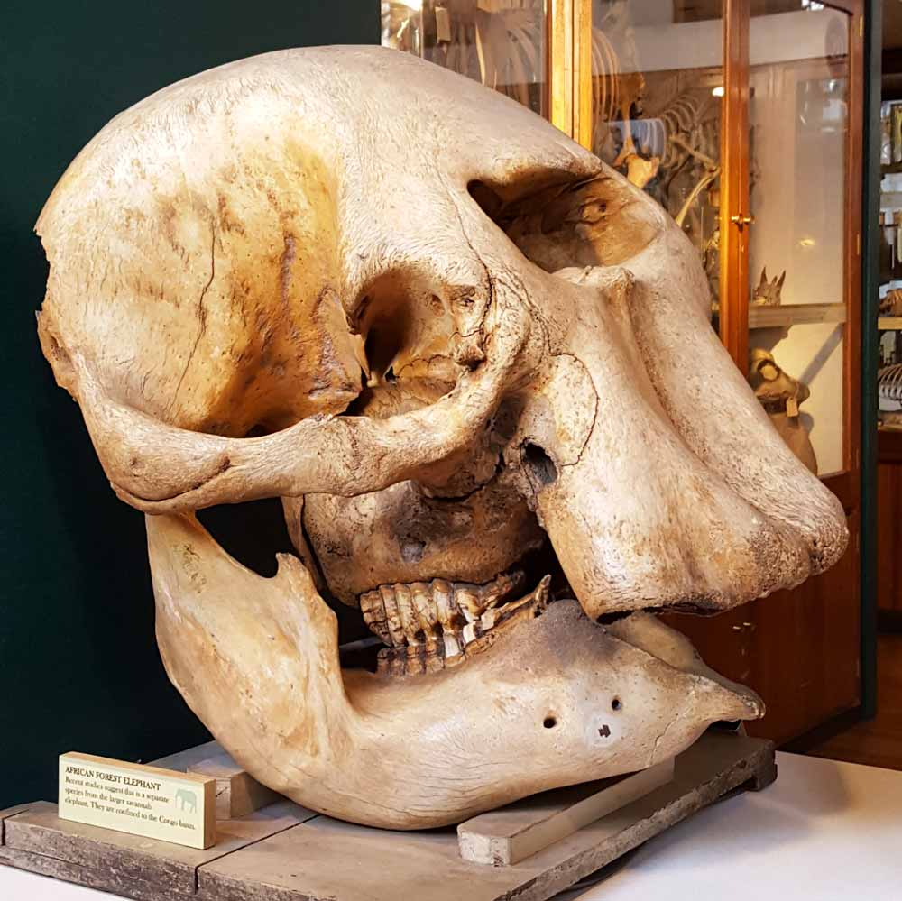 The Grant Museum is a brilliant small free London zoology museum just off Tottenham Court Road that kids will love