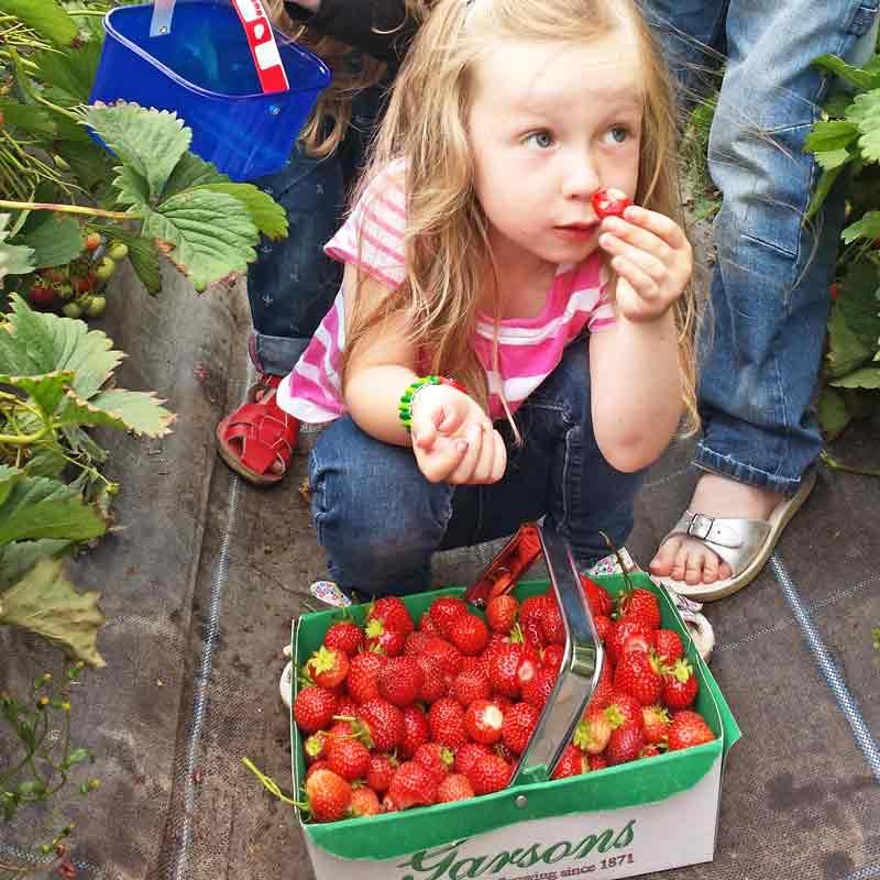 Pick strawberries London