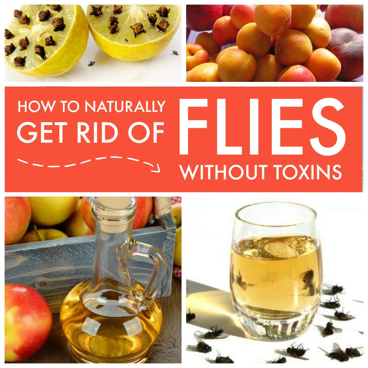 Get rid of flies naturally