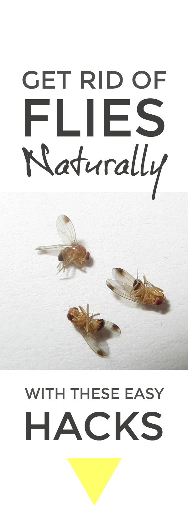 Get rid of flies easily but naturally without nasty toxic sprays that harm other wildlife #hacks #cleaninghacks #lifehacks #pests #naturalcleaning #green #greencleaning