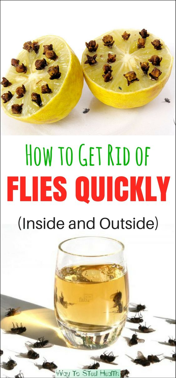 Use These Simple Summer Hacks And Tips To Get Rid Of Flies Fast But  Naturally Indoors