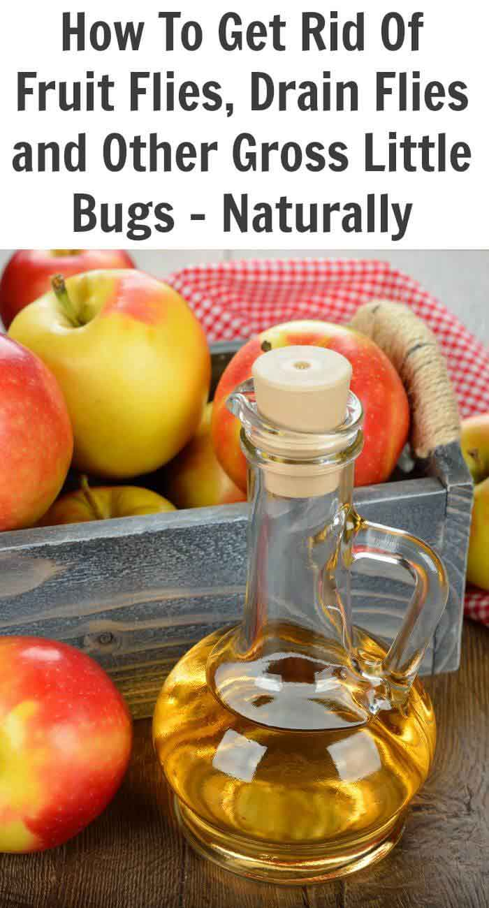 How To Get Rid Of Fruit Flies At Home