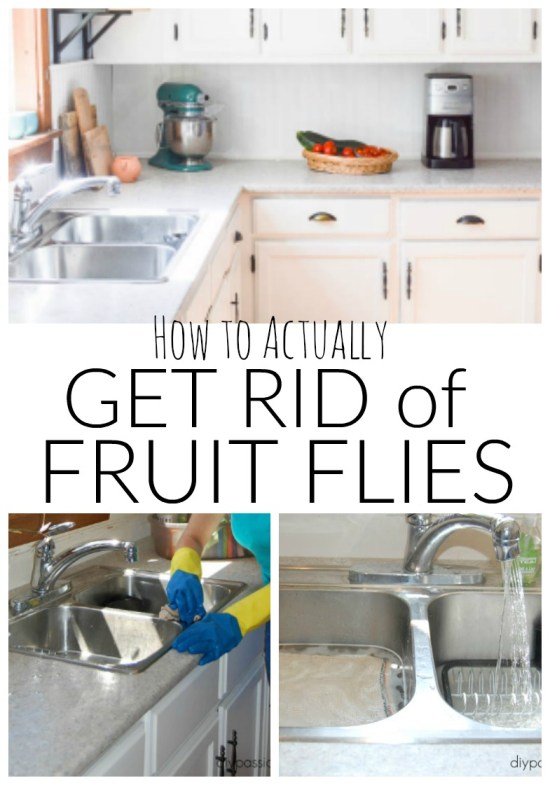 How to actually get rid of flies