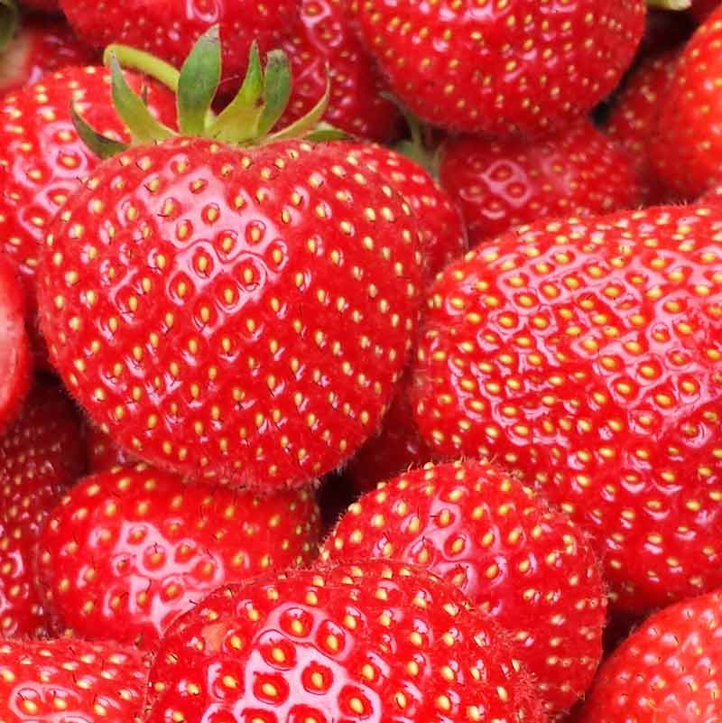 PYO farms in London where you can pick your own strawberries