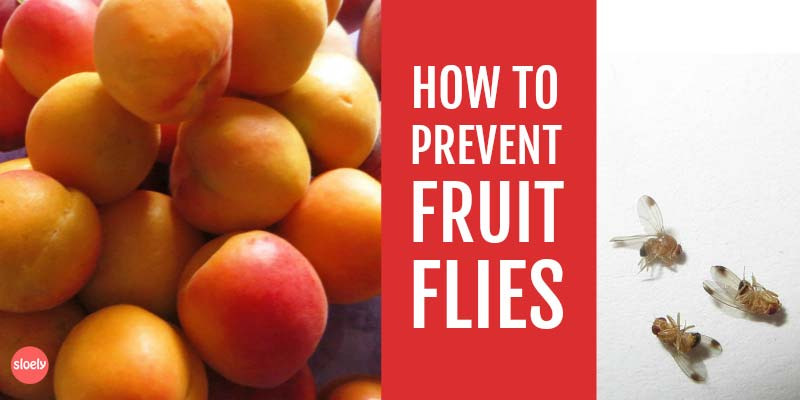 prevent fruit flies naturally