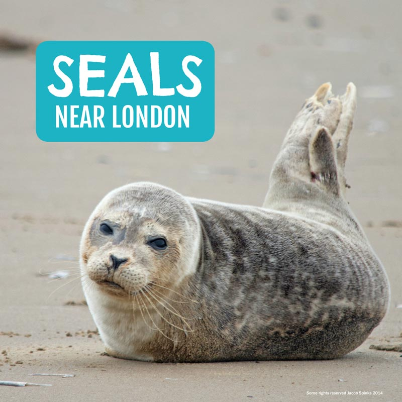Seals near London