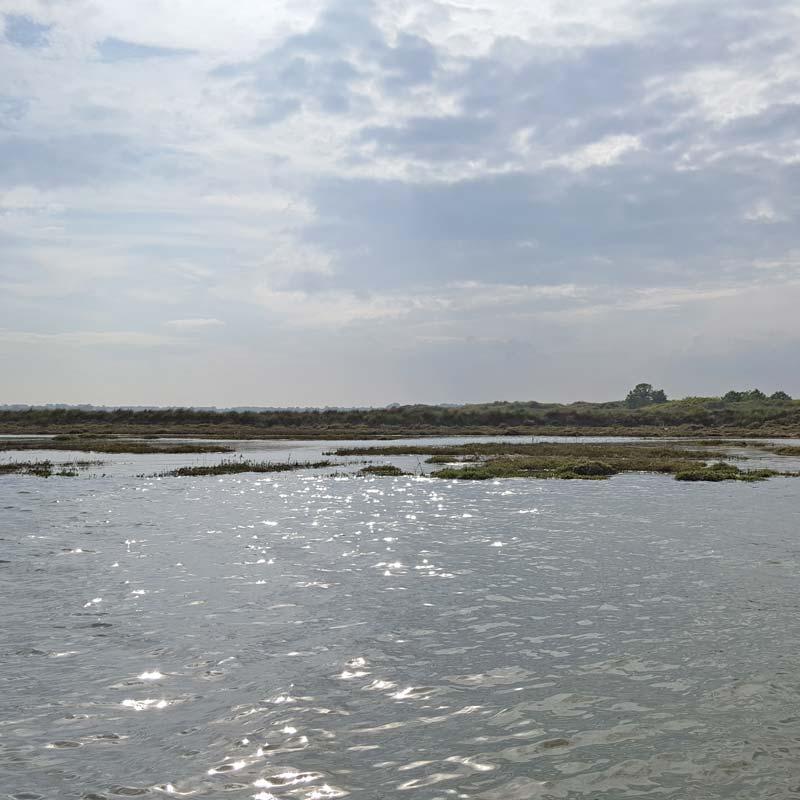 Seals near London - Secret Water Essex