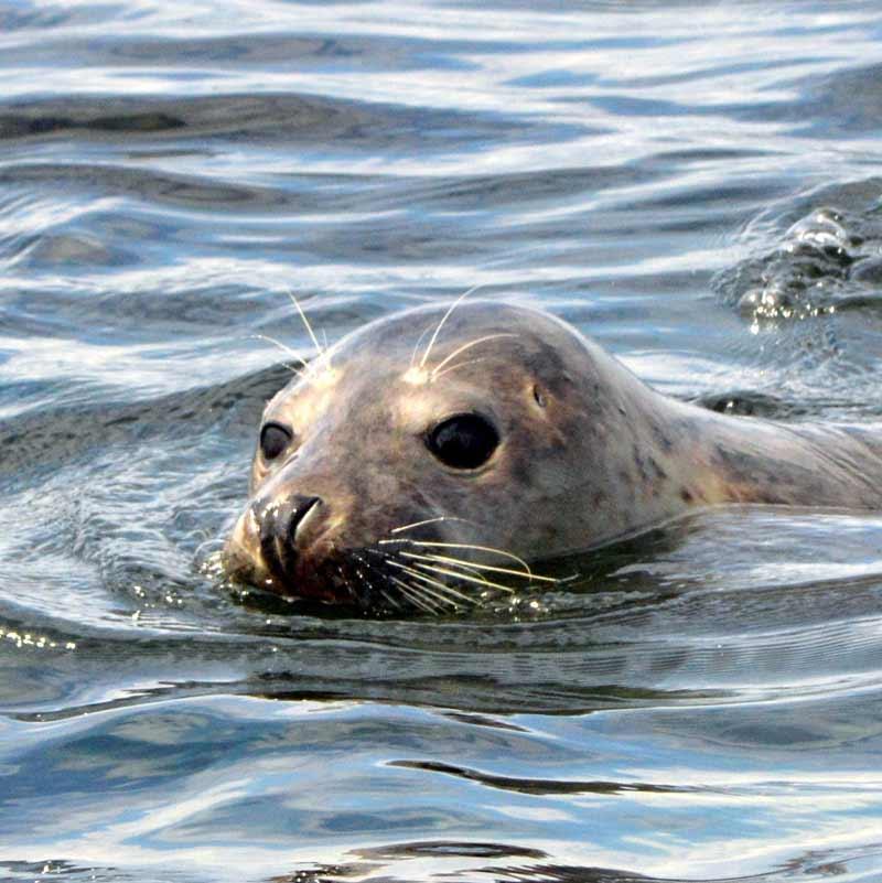 Seals near London