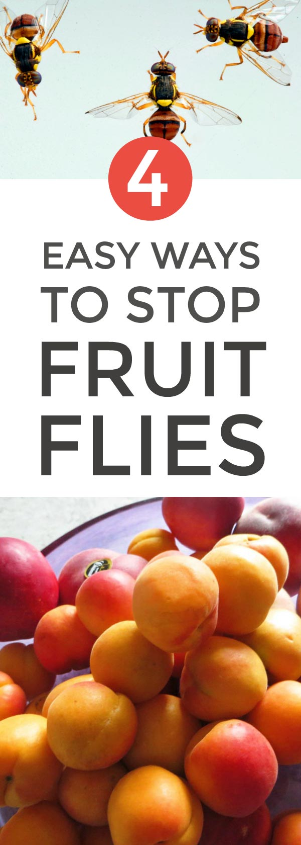 Stop fruit flies getting in with these 4 clever natural hacks #naturalhacks #lifehacks #pests #natural #naturalremedies #greancleaning #naturalcleaning #toxicfree #greenliving