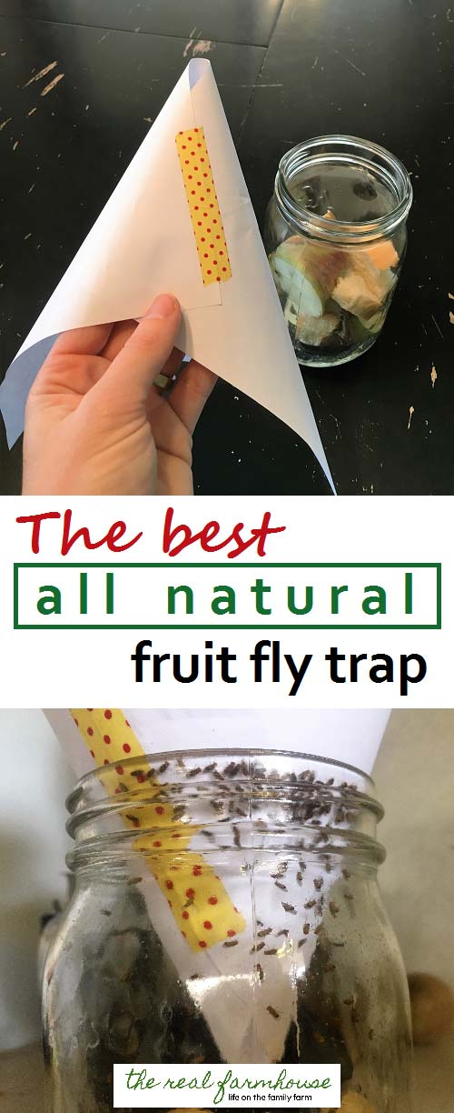 Get rid of flies naturally