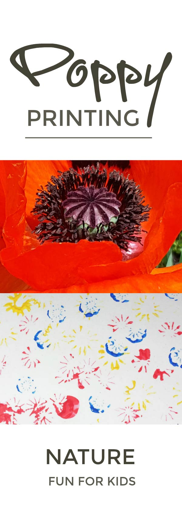 Poppy seed head printing - a lovely simple nature craft for kids that helps them explore natural shapes plus pollination and the lifecycle of flowers and seeds #flowers #poppies #nature #naturelover #printing #painting #naturecrafts #plantscience #lifecycle #seeds
