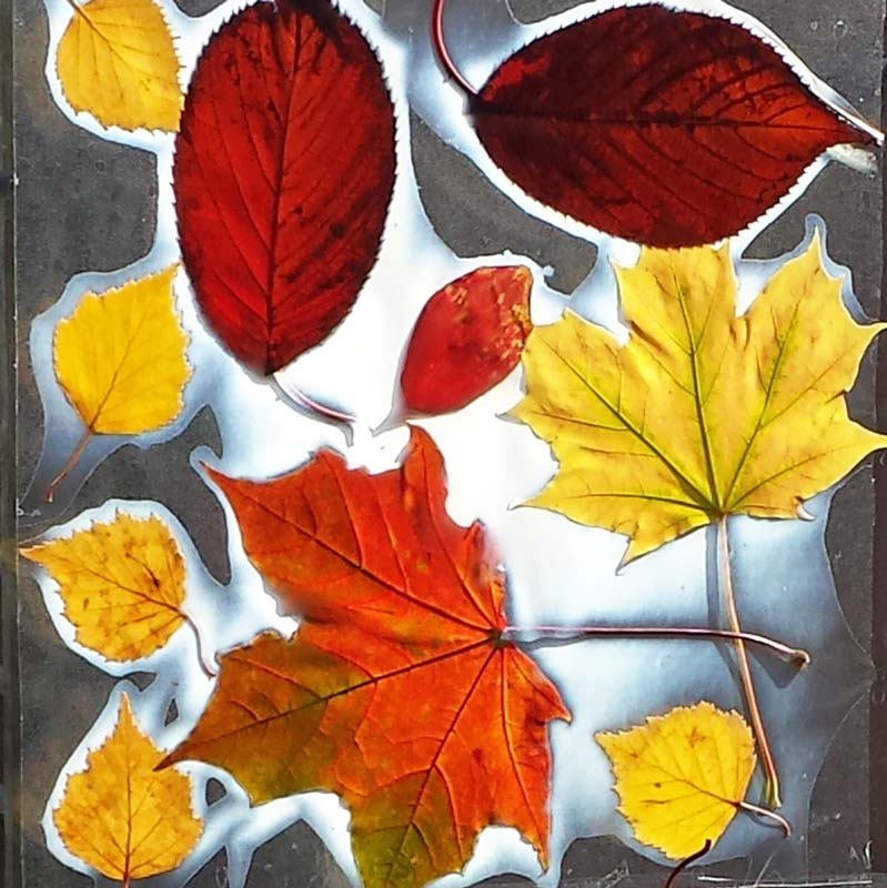 leaf craft ideas simple leaf craft 2315