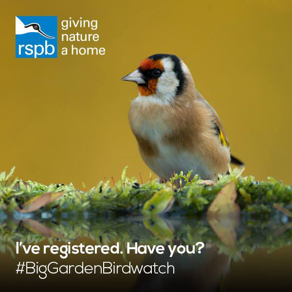 Inspire your little naturalist - get to know your garden birds with your kids  #naturelover #wildlife #birds
