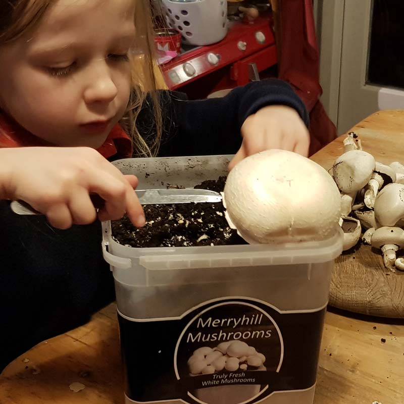 Growing mushrooms with kids - a lovely simple gardening activity that lets kids explore the science of fungi #gardening #gardenwithkids #mushrooms #plants #fungi #science #STEM