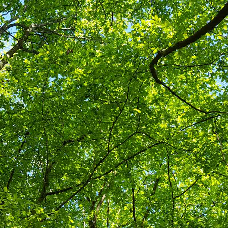 Oxleas Wood London - beautiful ancient woodland with stunning views across London and the perfect spot for family days out