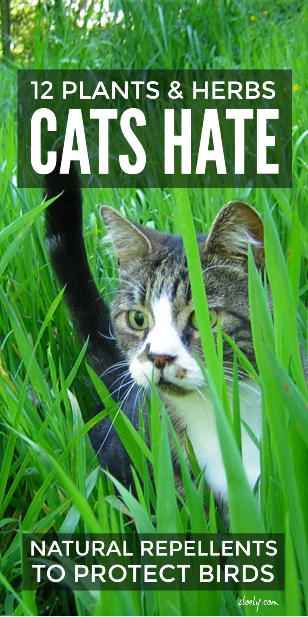 Cat Repellent Plants