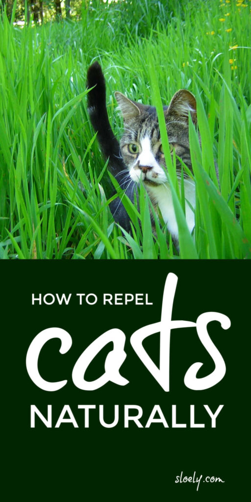 How To Repel Cats From Garden and Yards