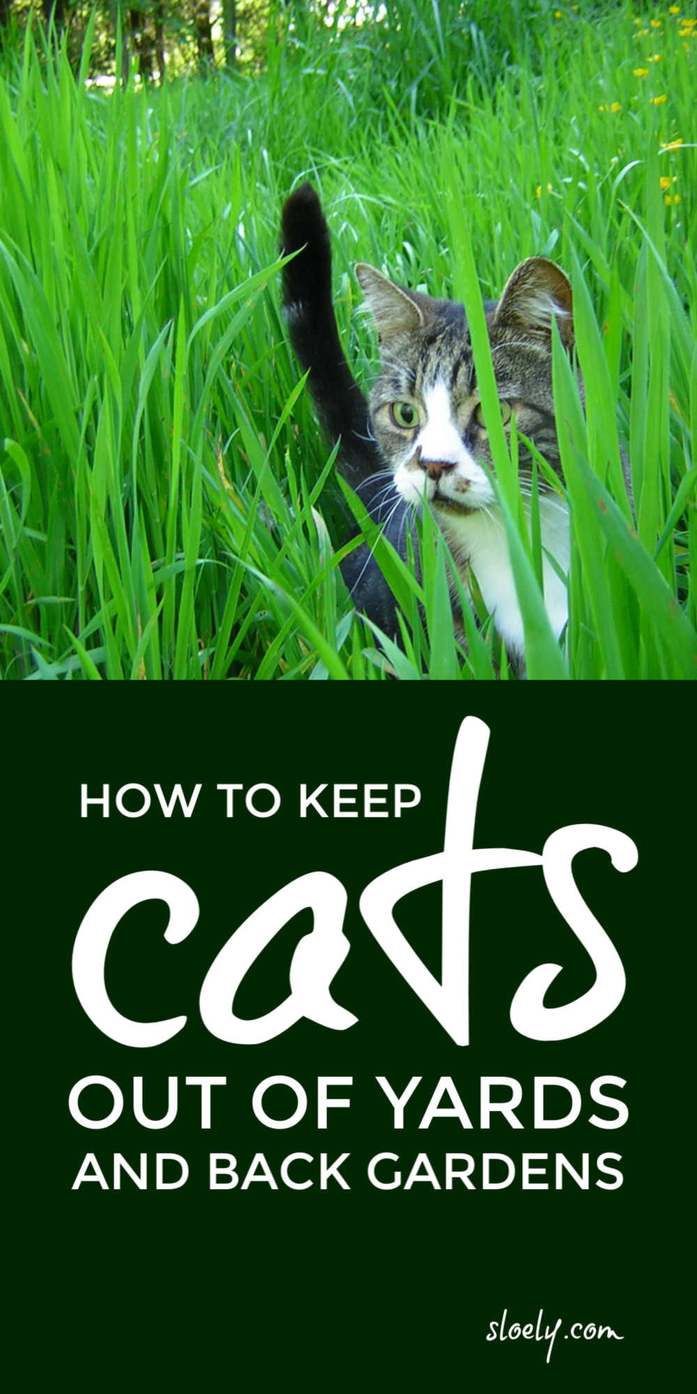 Keep Cats Out Of Gardens