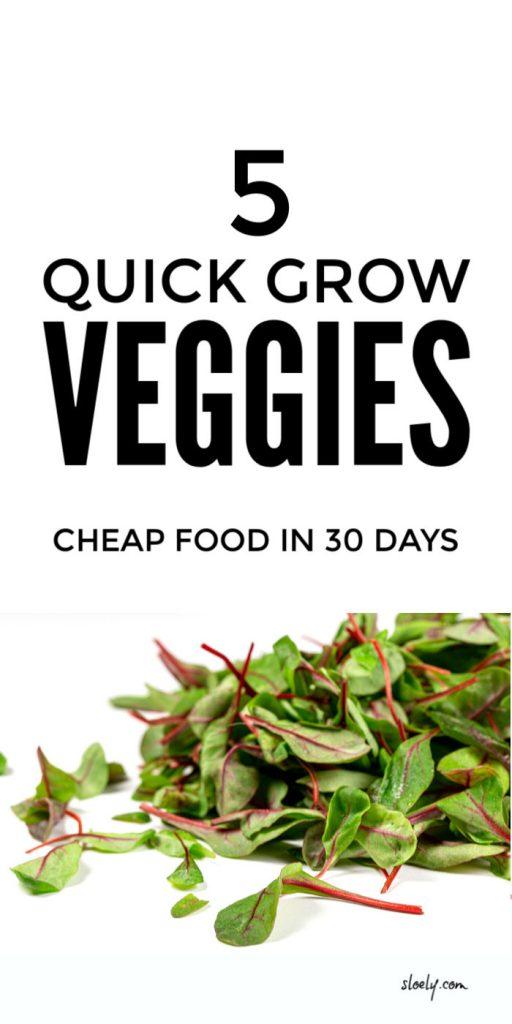 Quick Growing Vegetables