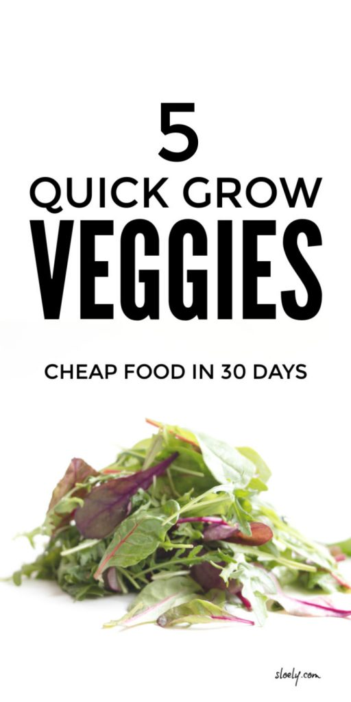 Quick Growing Vegetables