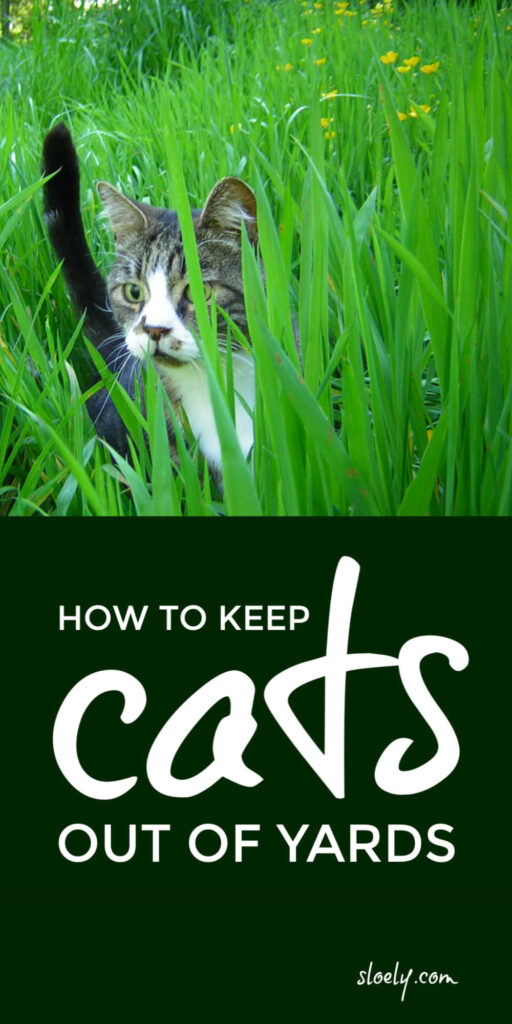 Repel Cats From Yards and Gardens