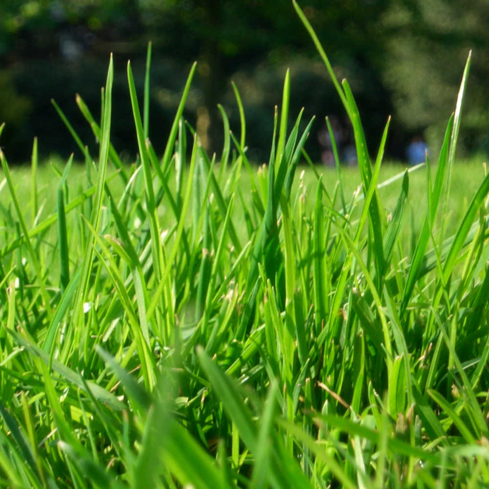Remove Grass Stains From Clothes Naturally