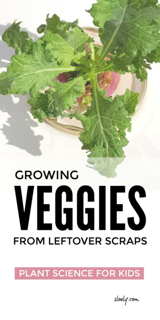 Plant Science For Kids - Growing Vegetables From Scraps