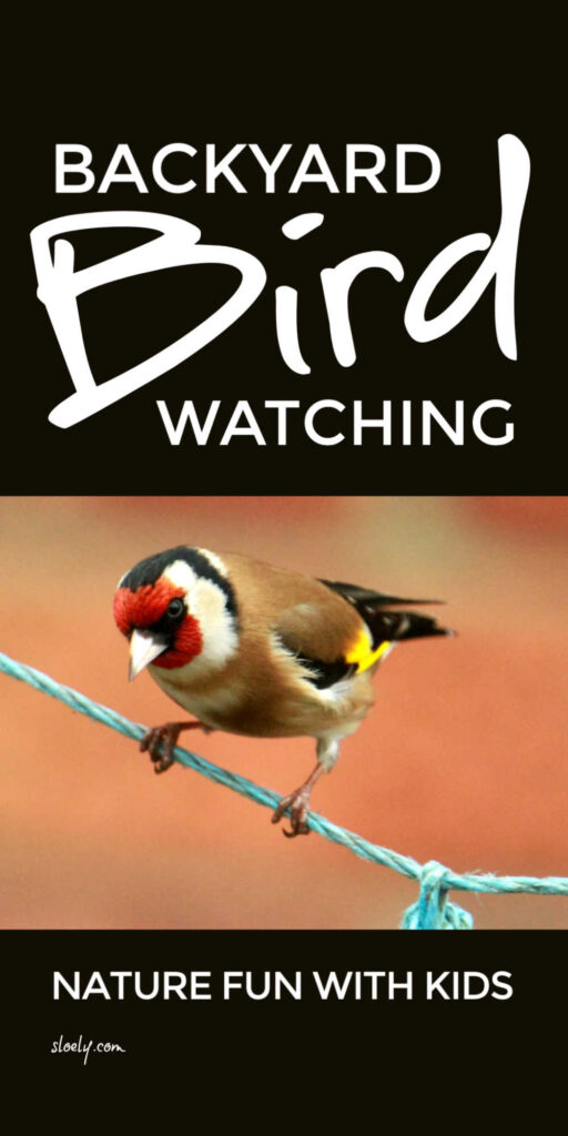 Birdwatching With Kids Activities