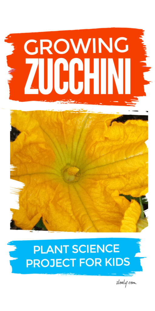 Growing zucchini with kids plant science