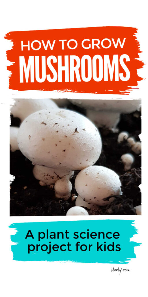 How To Grow Mushrooms With Kids