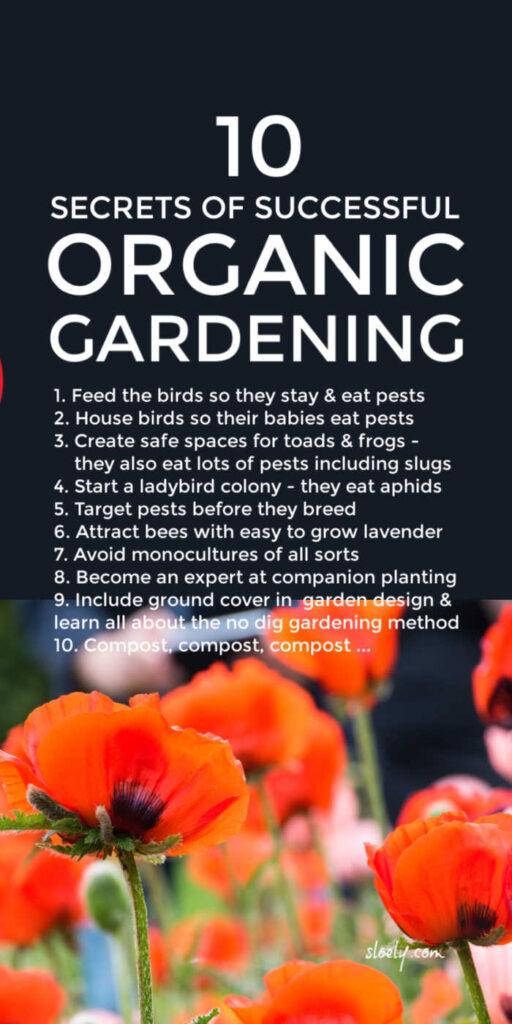 Organic Gardening Tips For Beginners