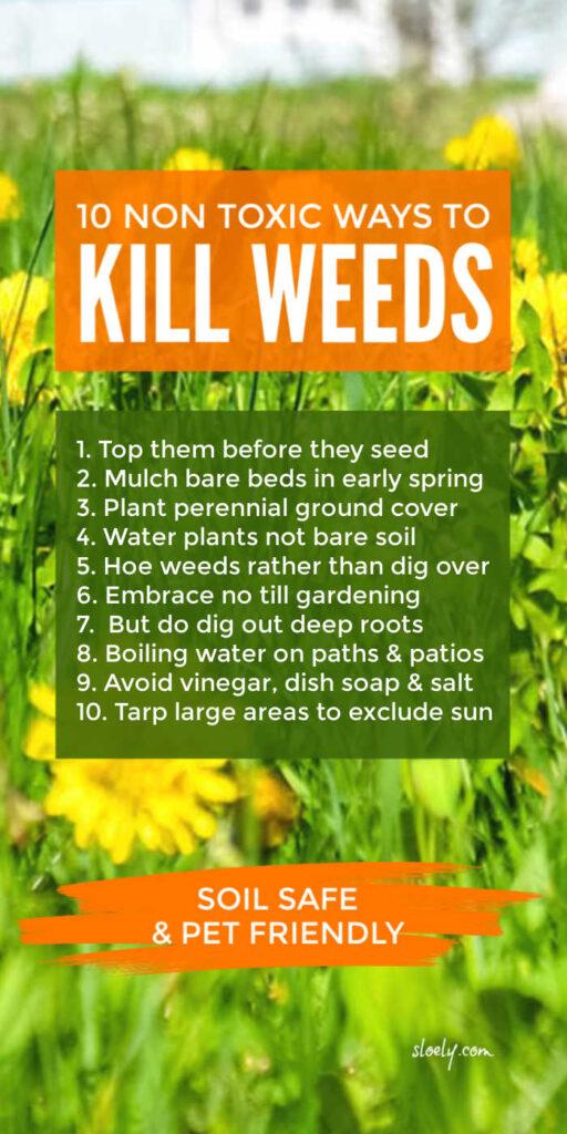 10 Ways To Kill Weeds