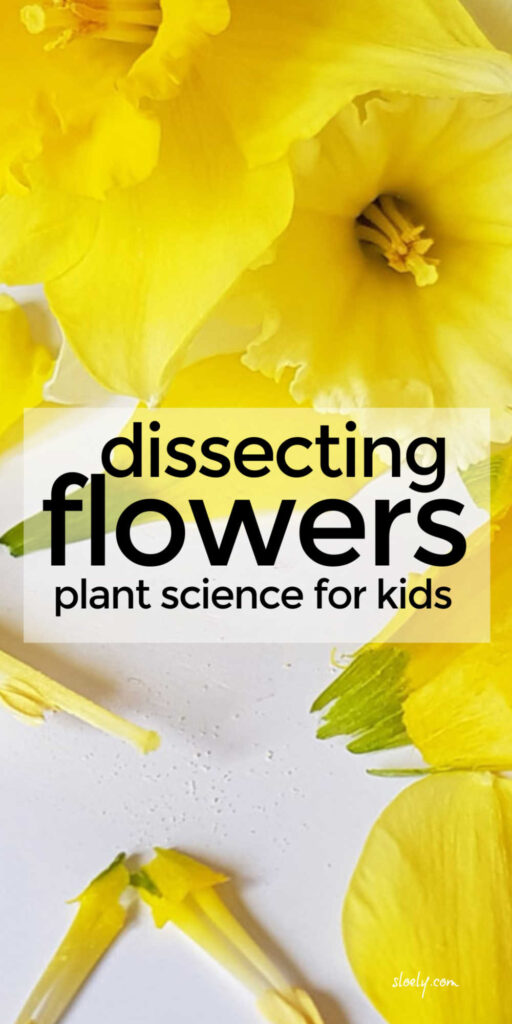 Dissecting Flowers Plant Science Project