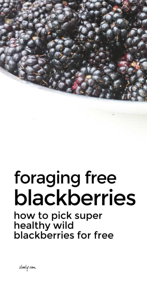 Foraging For Wild Blackberries