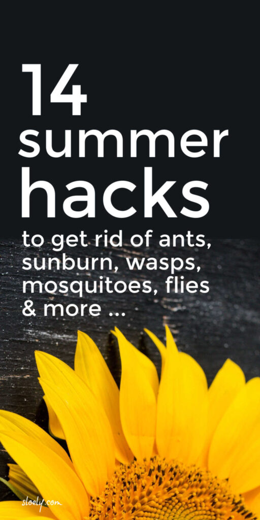 Natural Ways To Get Rid Of Wasps, Mosquitoes, Ants and Flies