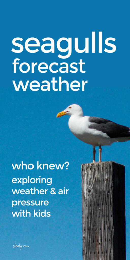 Seagulls Forecast Weather