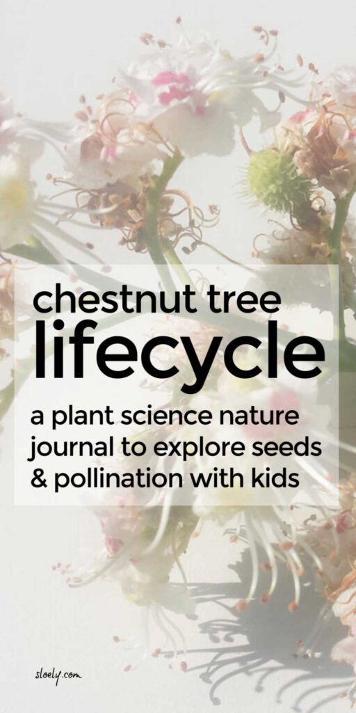 Tree Life Cycle Nature Journal