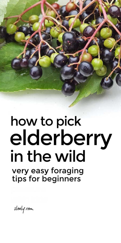Foraging Wild Food For Beginners