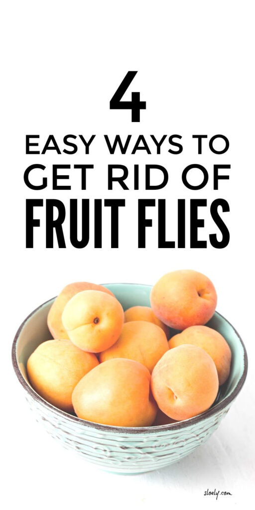 Prevent and Get Rid Of Fruit Flies