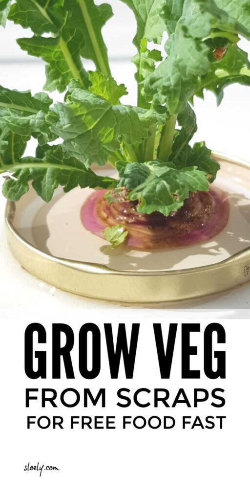 Grow Vegetables From Scraps