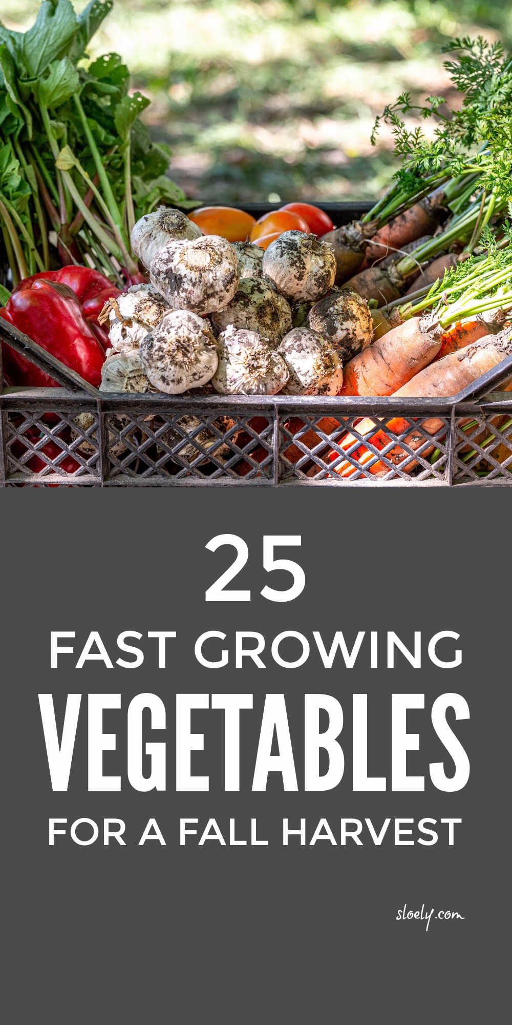 Fast Growing Vegetables For A Fall Harvest