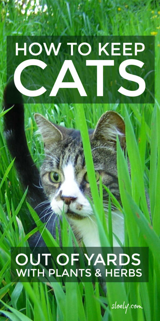 How To Keep Cats Out Of Yards & Gardens