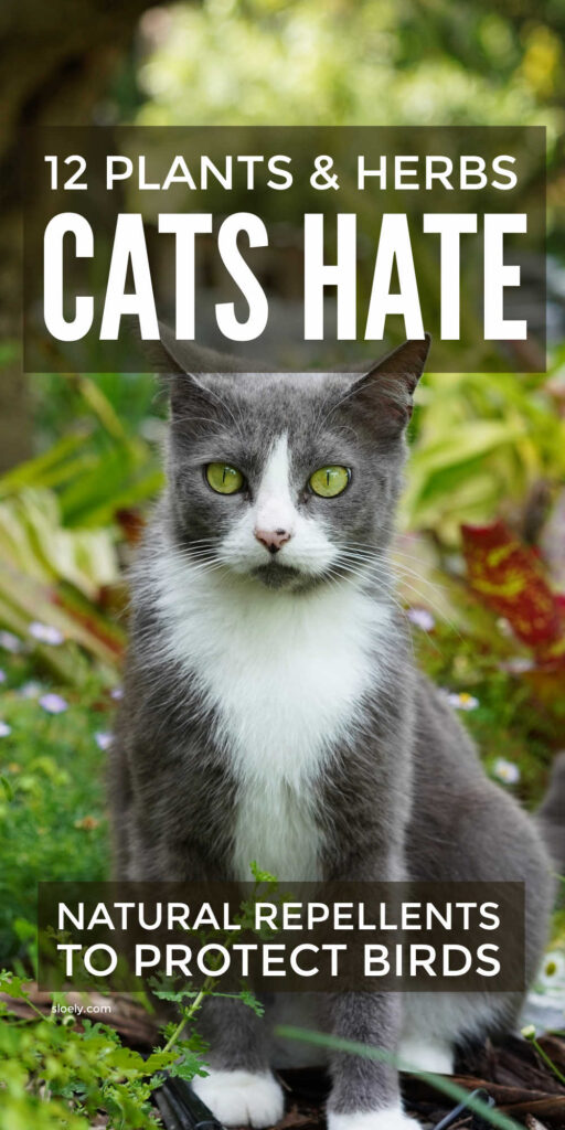 Cat Repellent Plants and Herbs