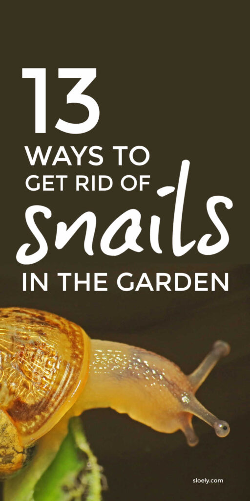 How To Get Rid Of Snails In the Garden